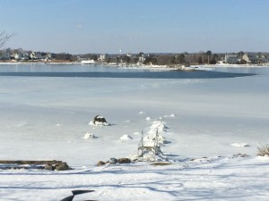Salt Pond